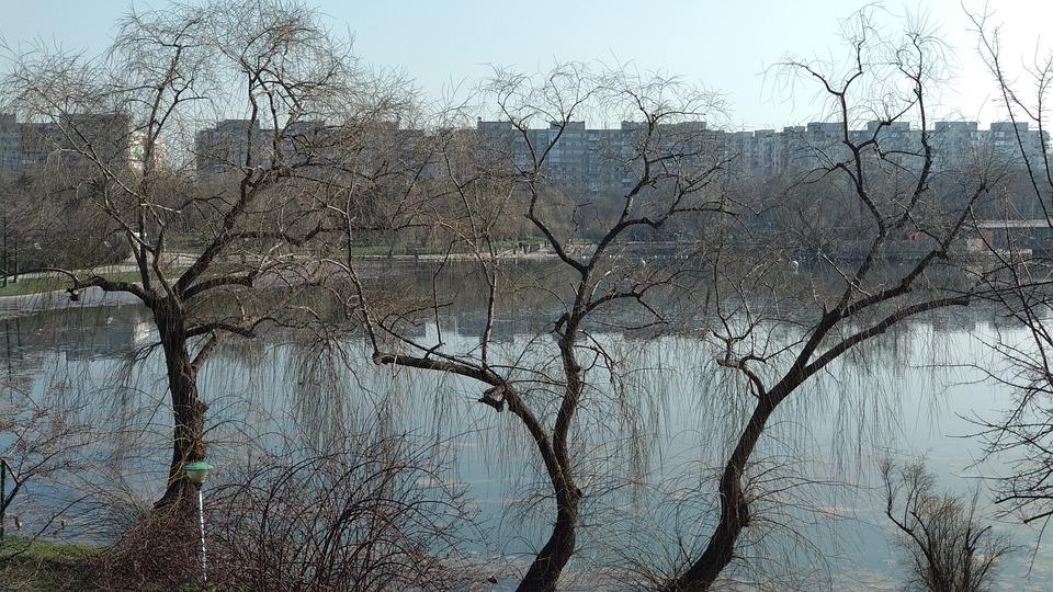 Tree, Nature, Branch, Winter, Landscape