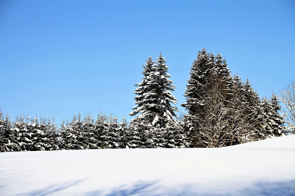 Free Photo Winter Tree Snow Trees Nature Austria Alps Cold Max Pixel
