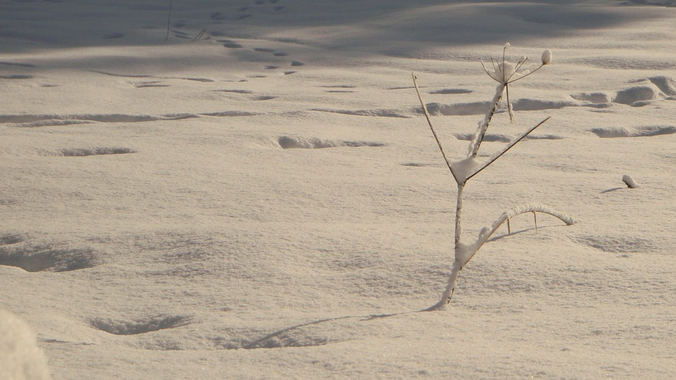 Snow, Tree, Tracks, Winter, Nature, Landscape