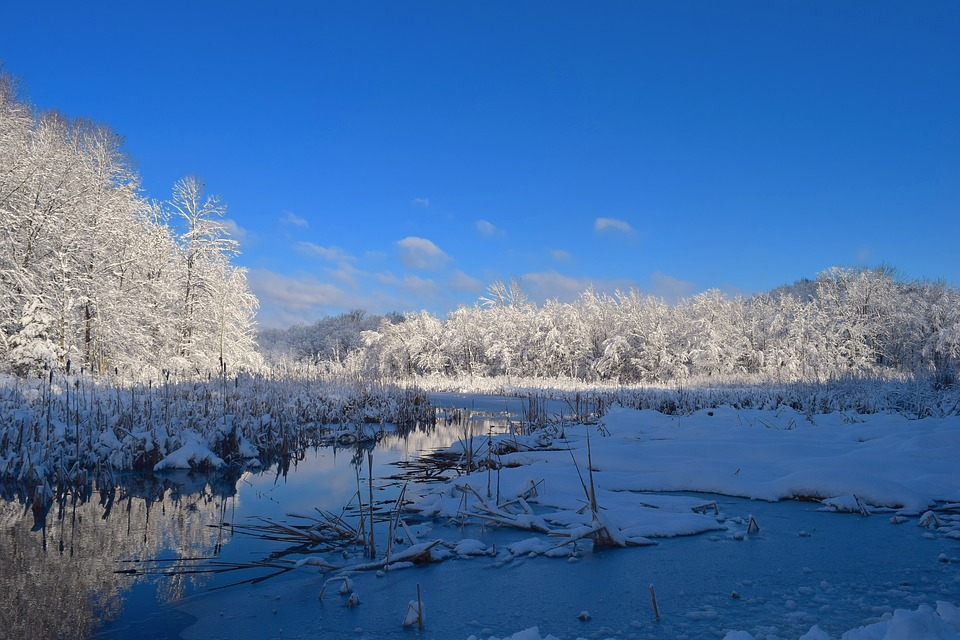 Landscape, Snow, Water, Winter, Tree, Cold, Frost