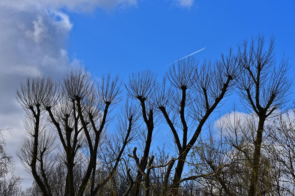 Tree, Trunk, Branch, Bare Trees, Winter Trees, Clipped