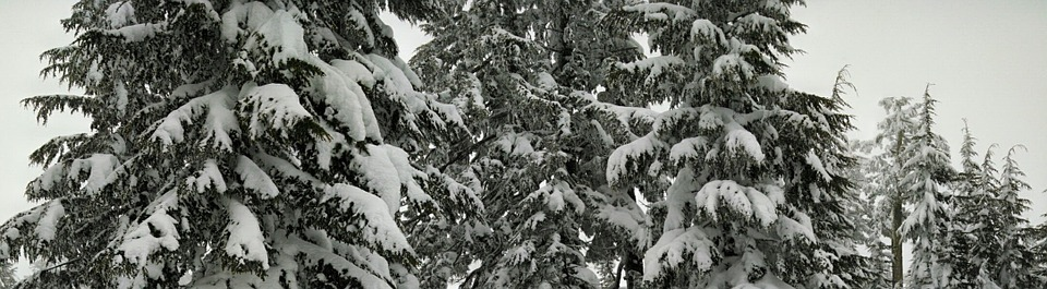 Snow, Trees, Forest, Pine, Winter, Season, Nature, Cold