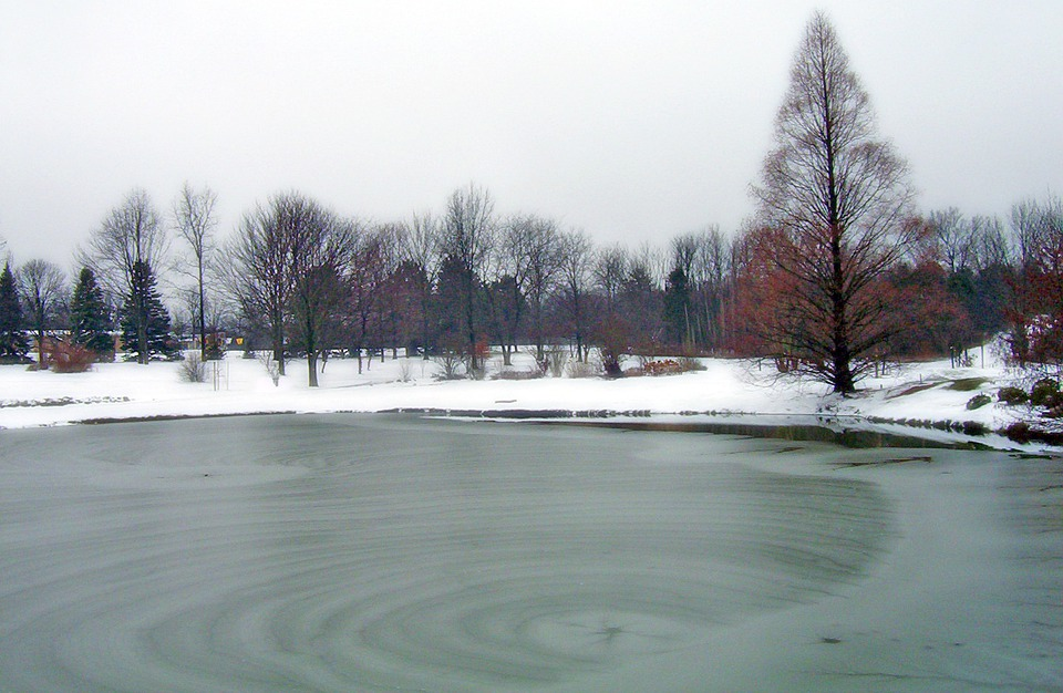 Frozen, Pond, Park, Ice, Winter, Trees