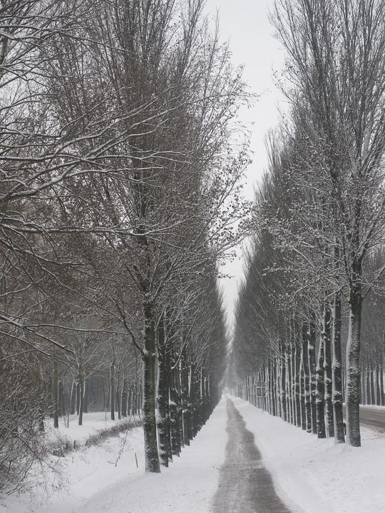 Netherlands, Landscape, Scenic, Winter, Snow, Trees