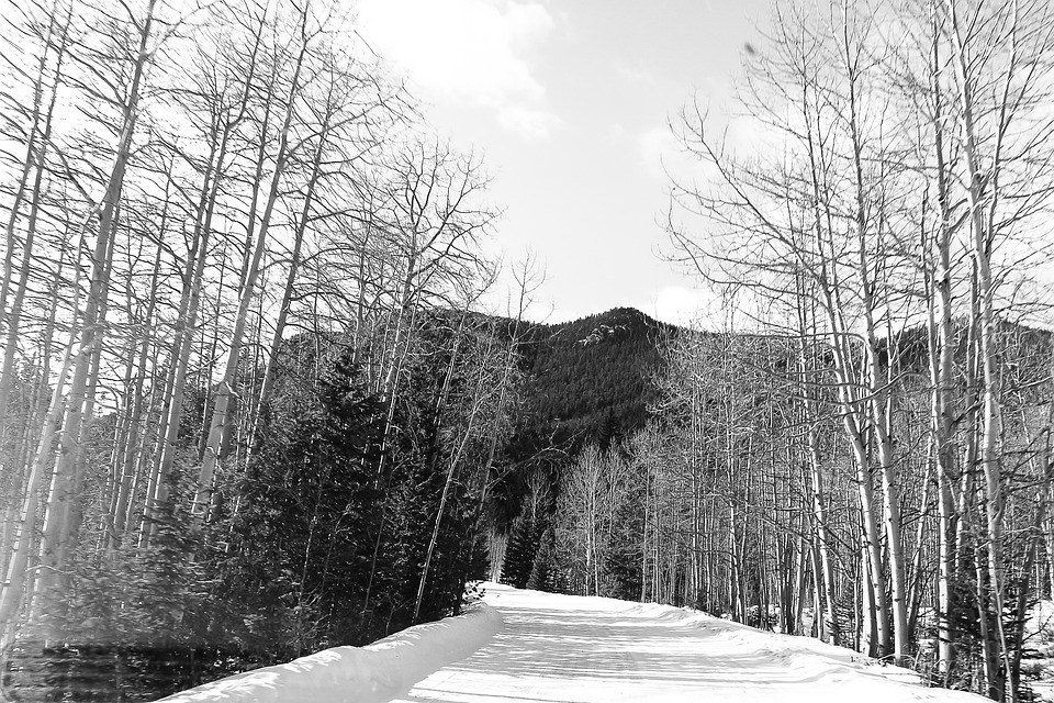 Mountain, Aspen, Snow, Colorado, Trees, Winter, White