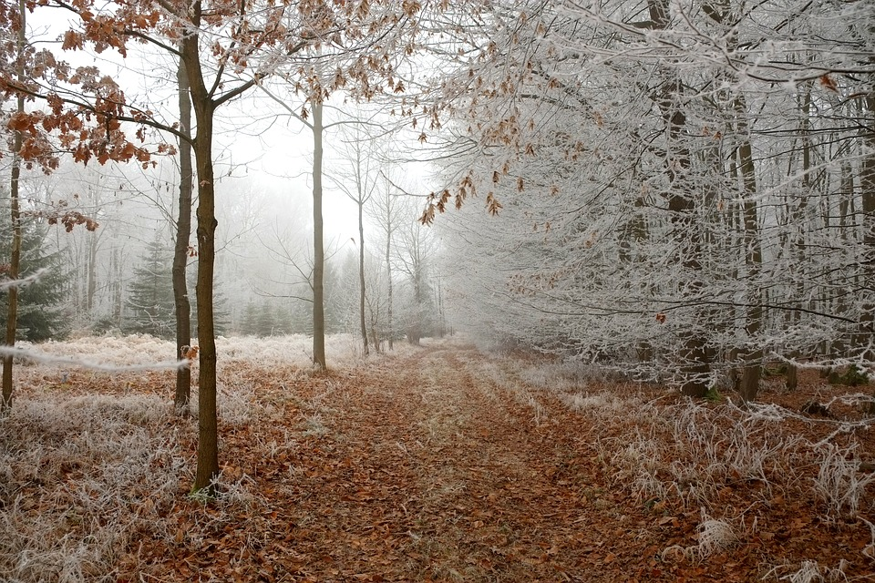 Forest, Path, Snow, Trees, Trail, Winter, Fog, Mist