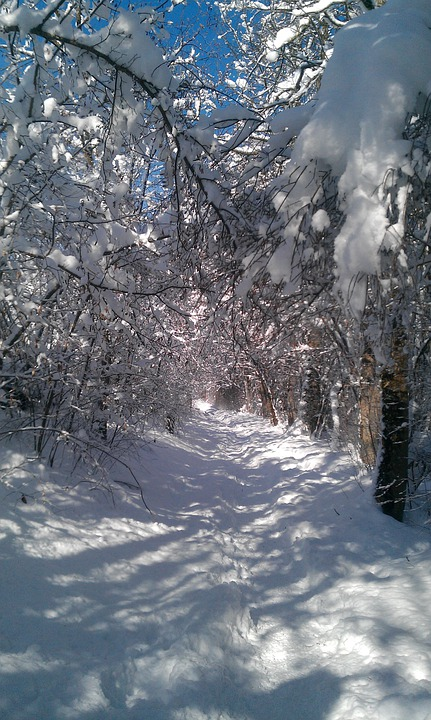 Winter Way, Path, Winter, Snow, Wintry, Cold