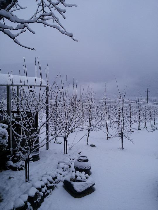 Winter Background, Winter, Winter Apple Tree