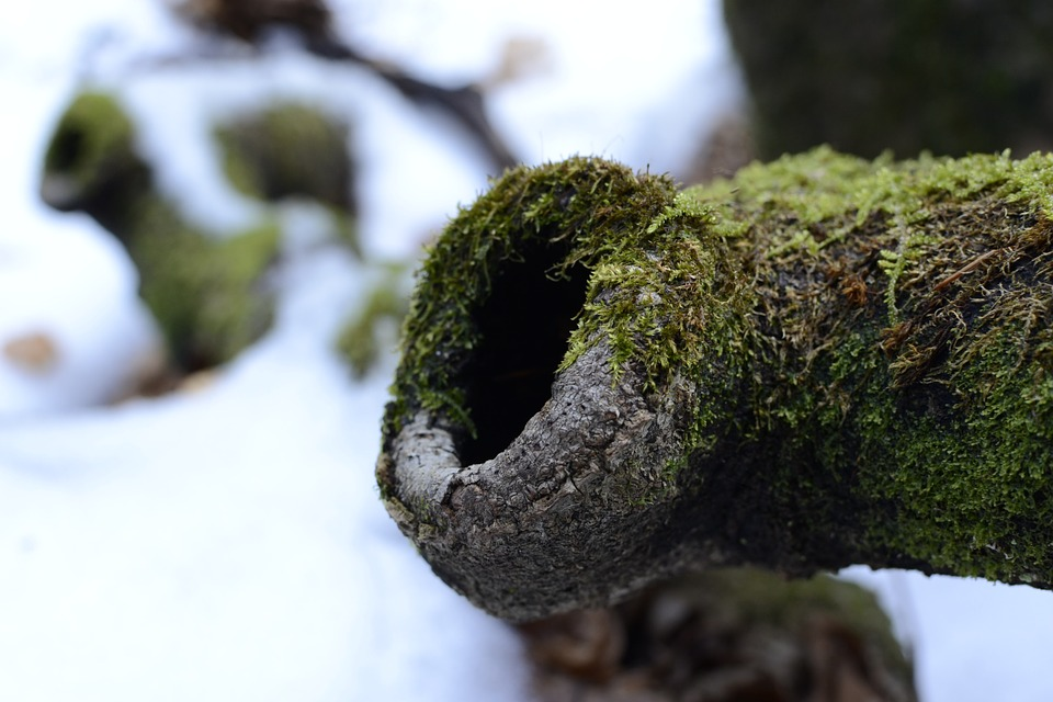 Knothole, Moss, Vermordert, Winter, Wood, Log