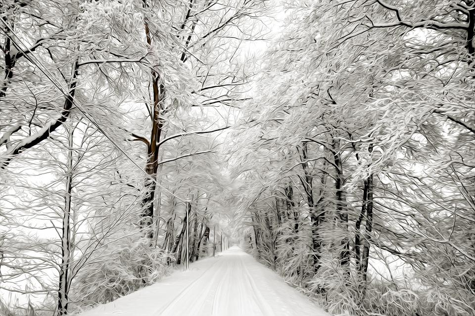 Winter, Snow, Tree, Wood, Season