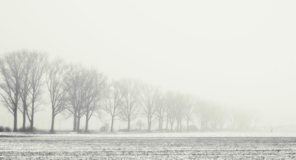 Avenue, Row Of Trees, Winter, Fog, Wintry, Landscape