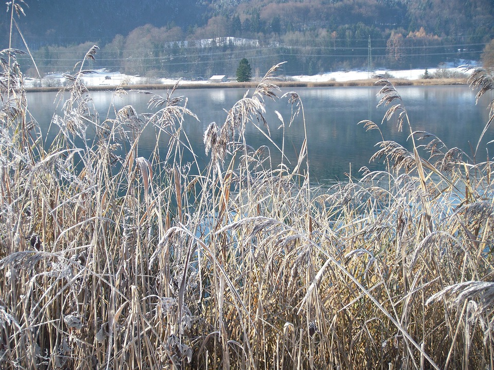 Winter Lake, Wintry, Frozen, Nature, Frost, Cold, Reed