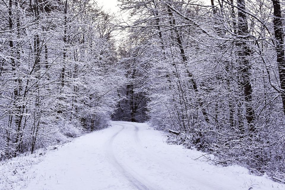Winter, Hoarfrost, Snow, Forest, Wintry Forest