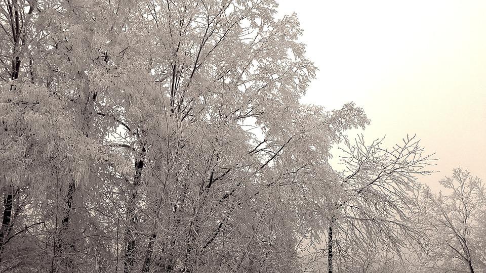 Wintry, Winter, Hoarfrost, Frozen