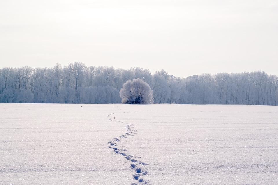 Traces, Snow, Snow Lane, Footprints, Reprint, Wintry