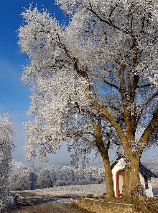 Winter, Cold, Wintry, Forest, Winter Cold, Eiskristalle