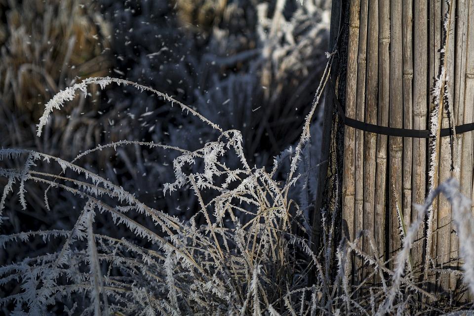 Wintry, Ice, Frozen, Frost, Winter Dream