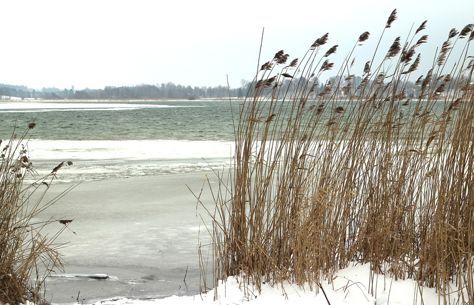 Winter, Snow, Bank, Reed, Wintry, Lake, Ice, Nature