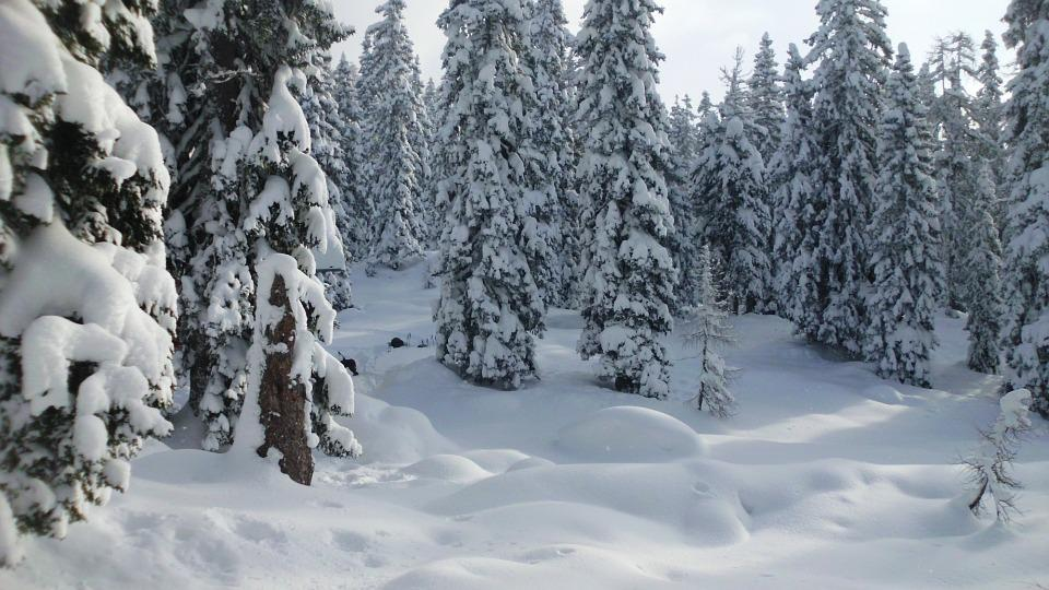 Snow, Winter Forest, Mountains, Wintry, Winter Magic