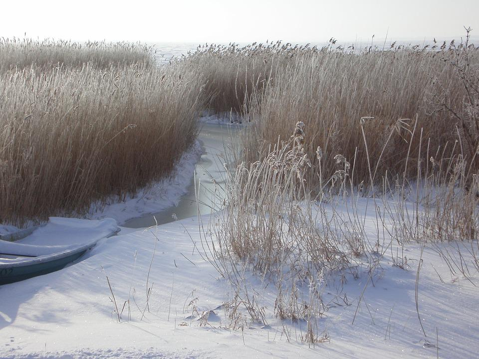 Winter, Wintry, Bank, Reed, Hoarfrost, Nature, Snow