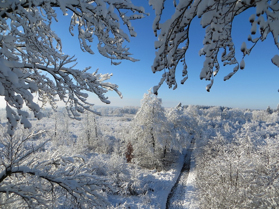 Winter, Trees, Sky, Blue, Branches, Frost, Snow, Wintry