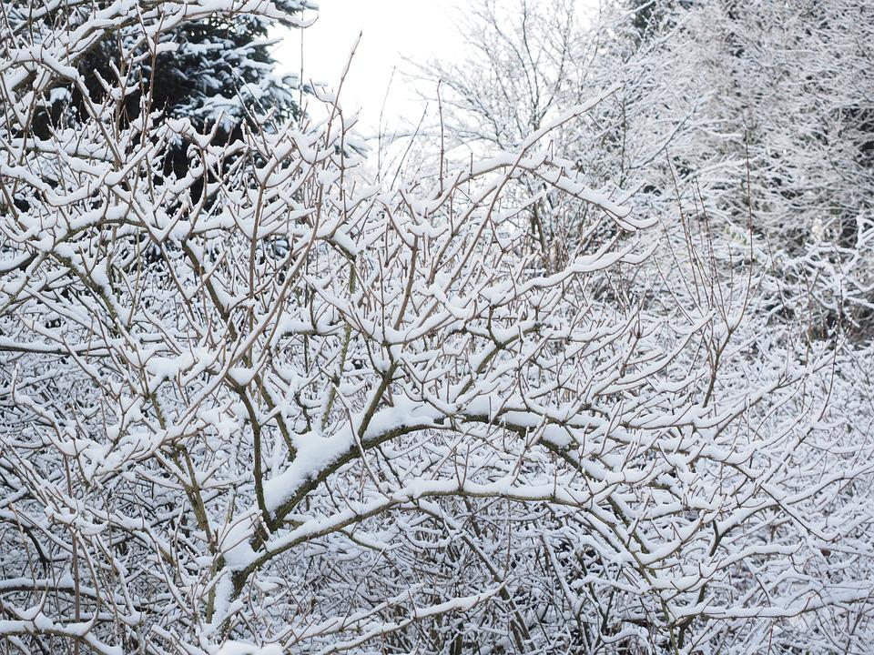 Winter, Snow, Trees, Snowed In, Winter Forest, Wintry