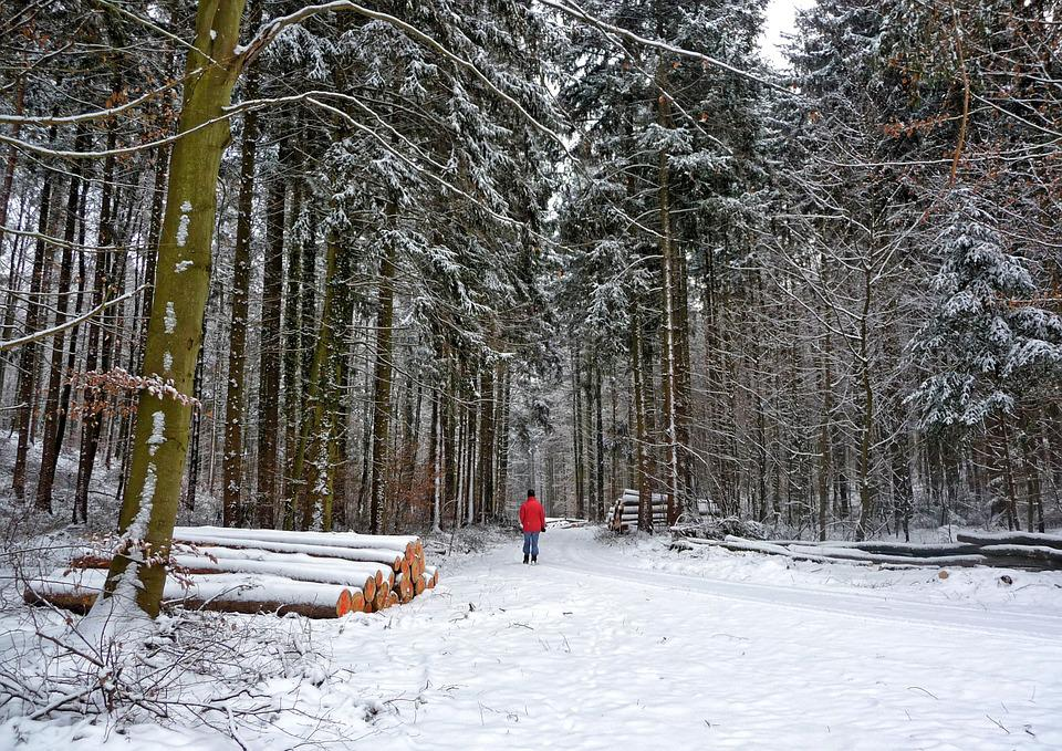 Forest, Winter, Wintry, Walk, Trees, Winter Way, Snow
