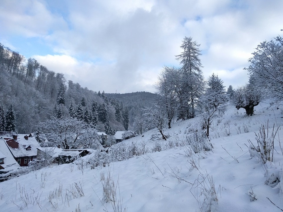 Winter, Snow, Wintry, Forest, Nature, Winter Dream