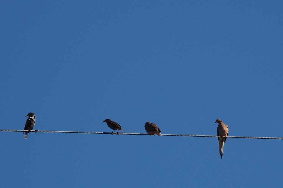 Birds, Blue Sky, Wire