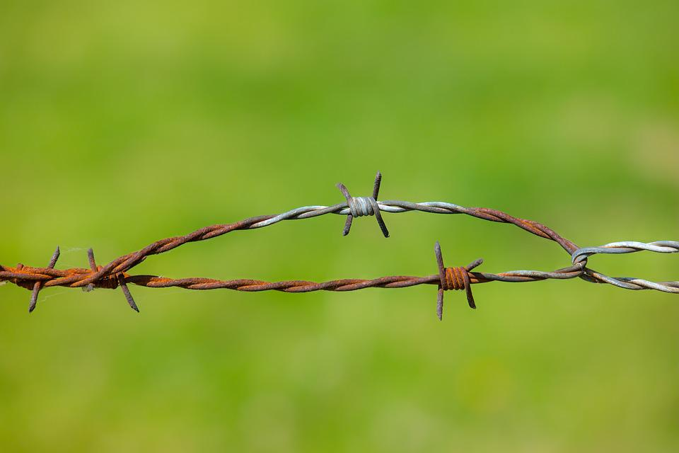Barbed Wire, Fence, Stainless, Wire, Pasture, Meadow