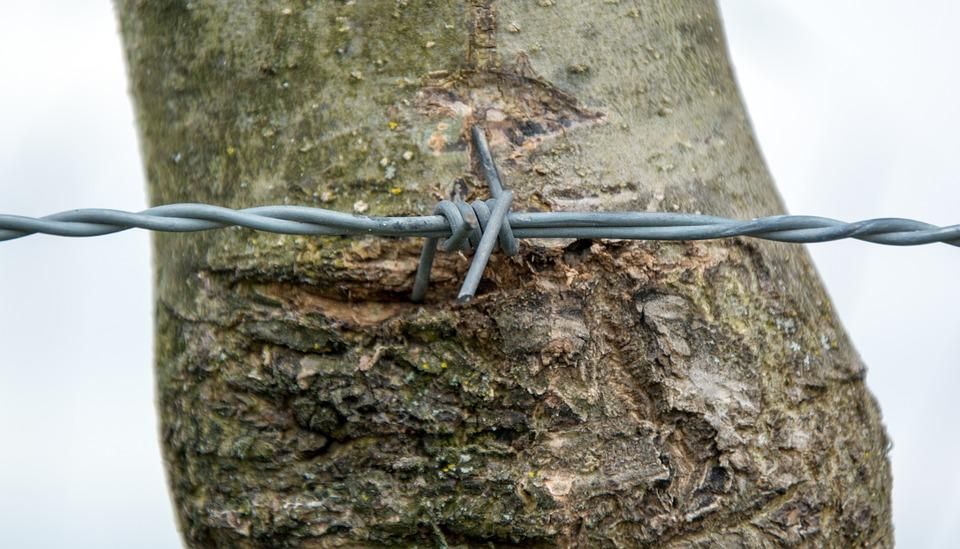 Barbed Wire, Wire, Rotated, Close, Wiring, Tree, Bark