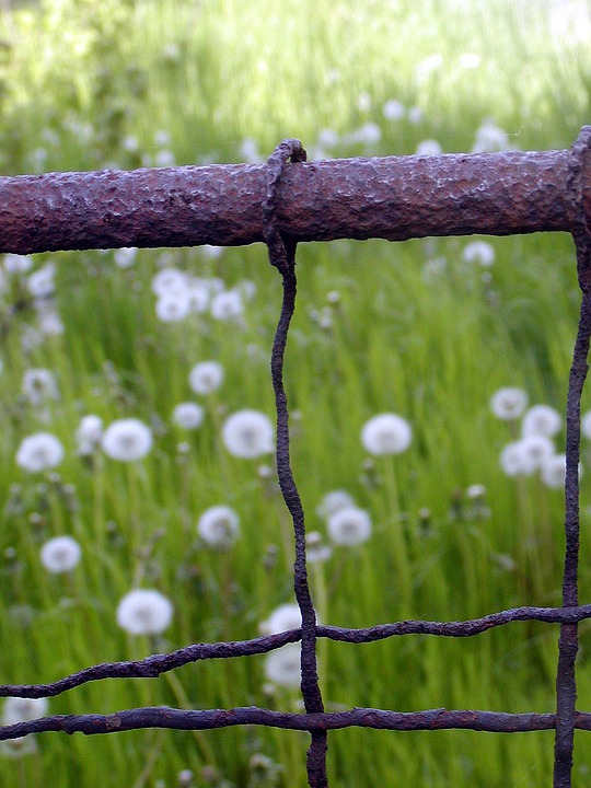 Fence, Old, Rust, Wire, Garden