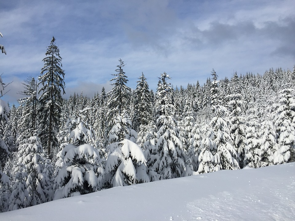 Winter, Snow, Wisla, Forest, Evergreen