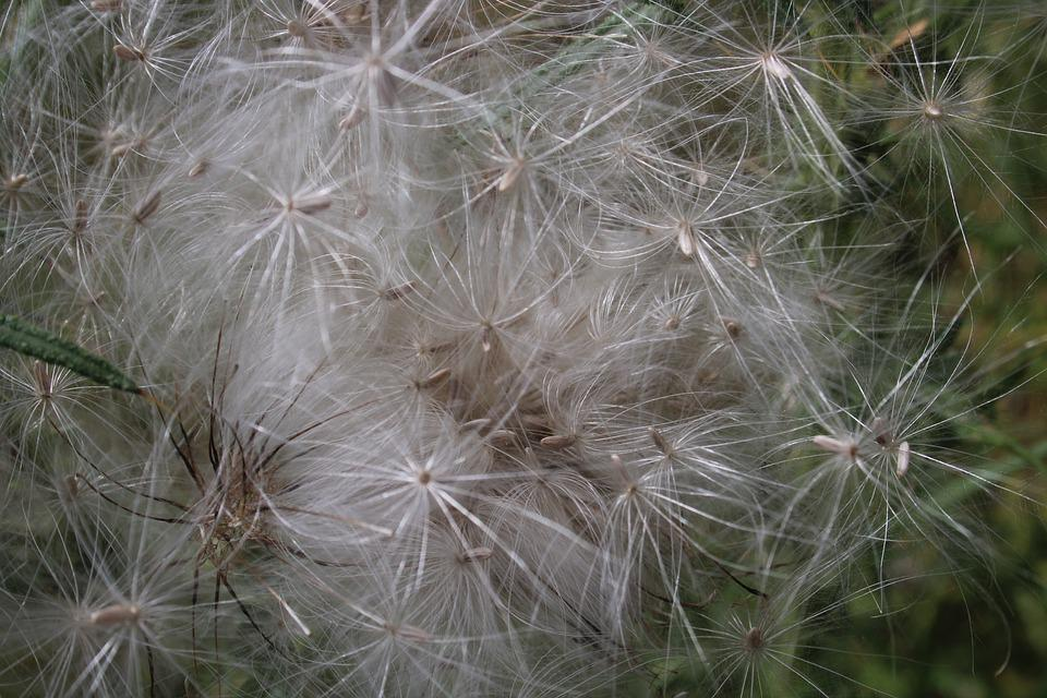 Seed Heads, Pattern, Nature, Fluffy, Wispy