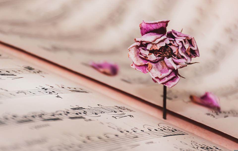 Music Sheet, Dried Rose, Vintage, Rose, Withered, Music