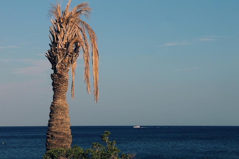 Palm, Withers, Sea, Coast, Mediterranean, Dry, Beach