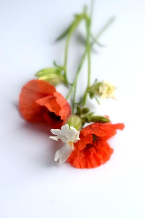 Wolf, Poppy, Bouquet, Alpine, Summer, Red