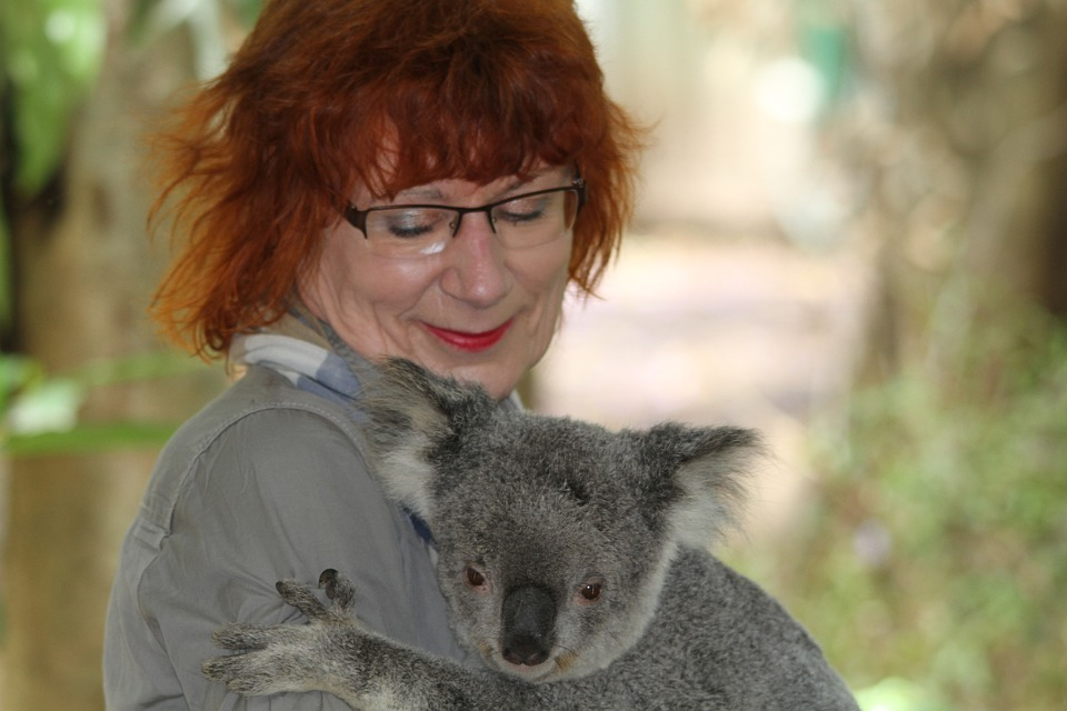 Koala, Phascolarctos Cinereus, Woman, Human, Encounter
