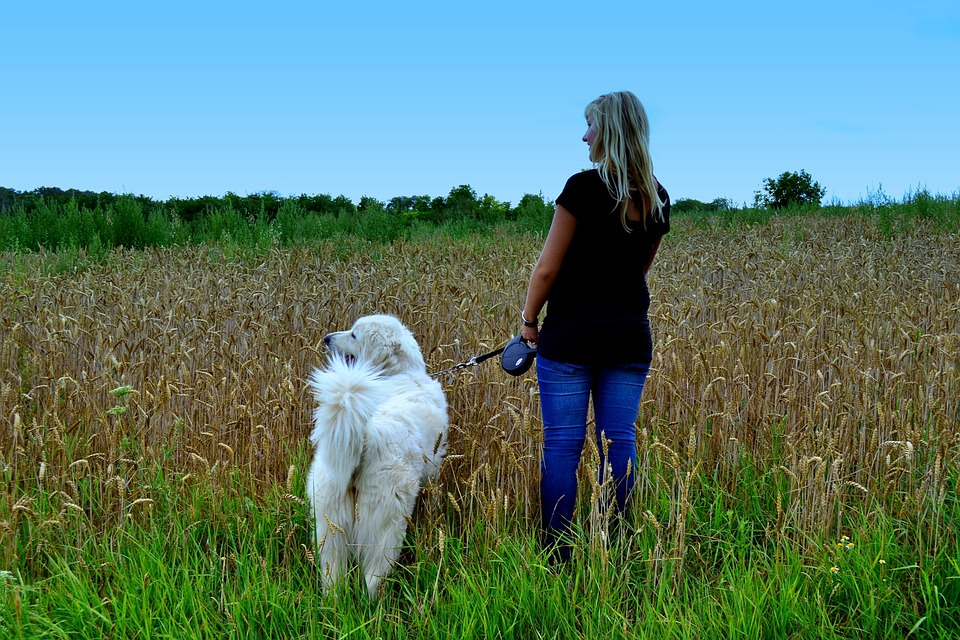 Woman, Dog, Nature, To Take The Dog Out, Walk, Person