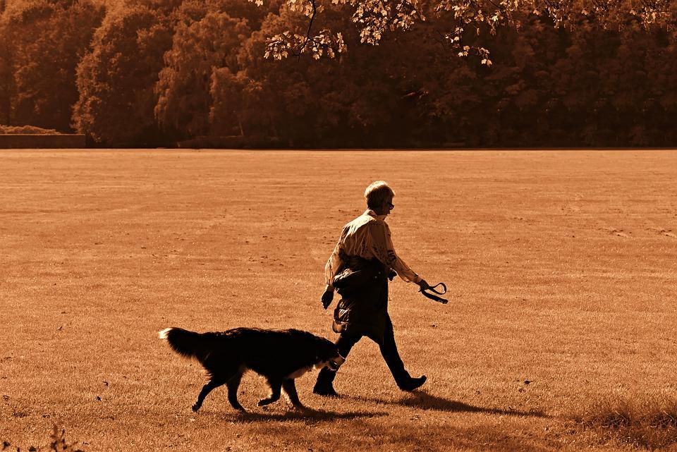 Man, Woman, Dog, Walking, Field, Pair, Pet, Domestic