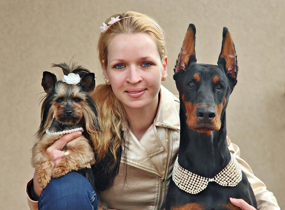 Yorkie, Doberman, Woman, Dogs, Love, Portrait, Animal