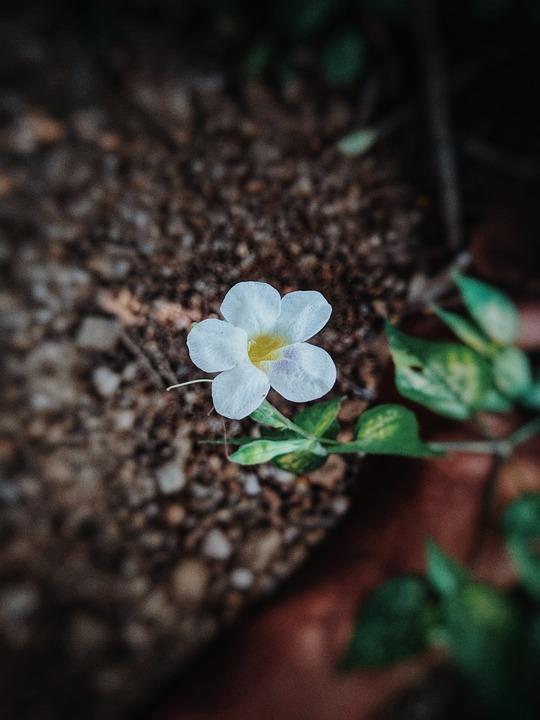 Nature, Wonder, Spring, Bloom, Green, Blossom, Thinking