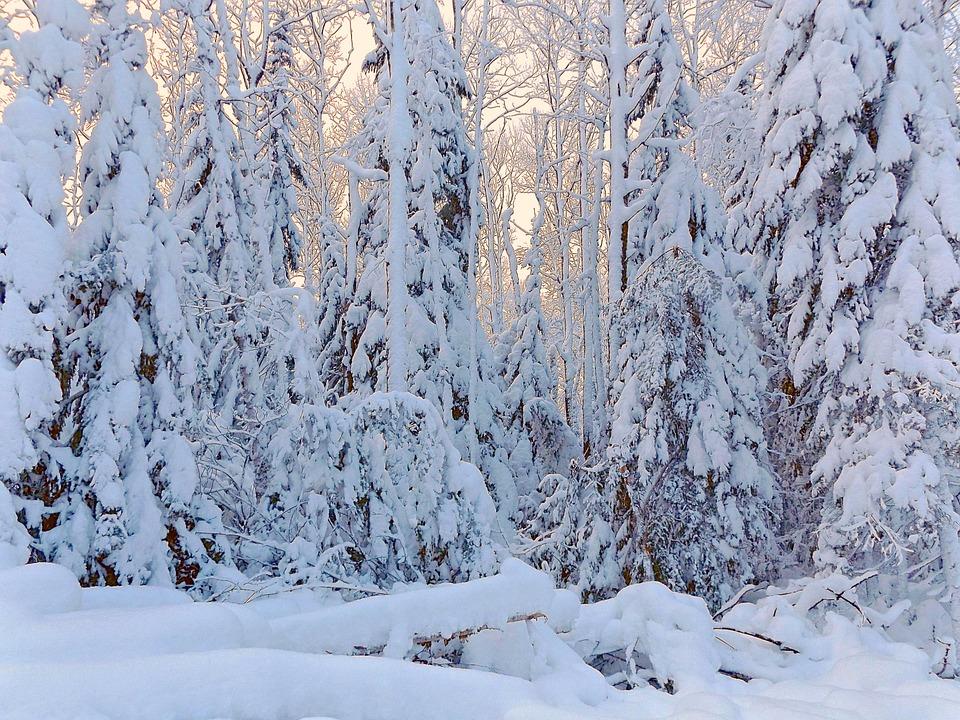 Winter, Wonderland, Snow, Christmas, Forest, Scene