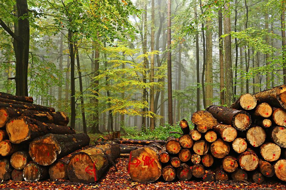 Forest, Wood, Tree Trunks, Fog, Autumn Felling