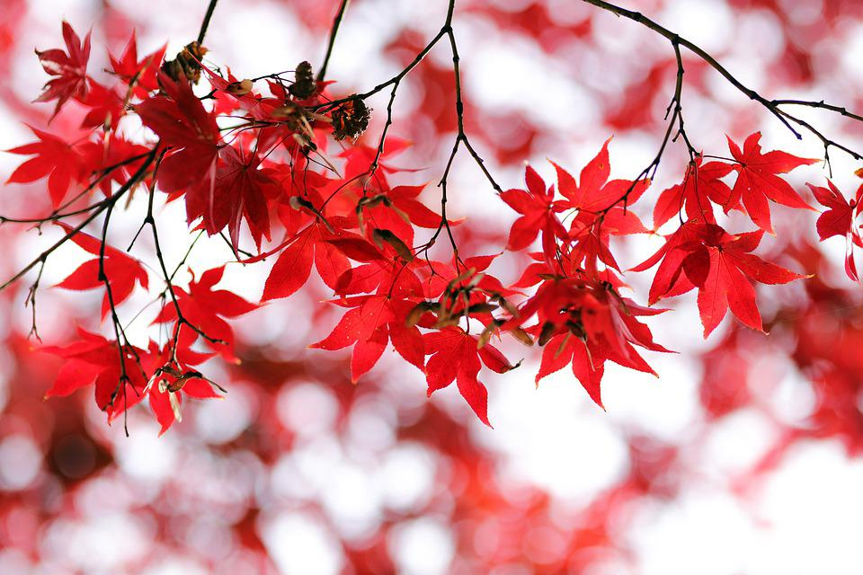 Autumn Leaves, Autumn, Wood, Leaves, Nature, Season