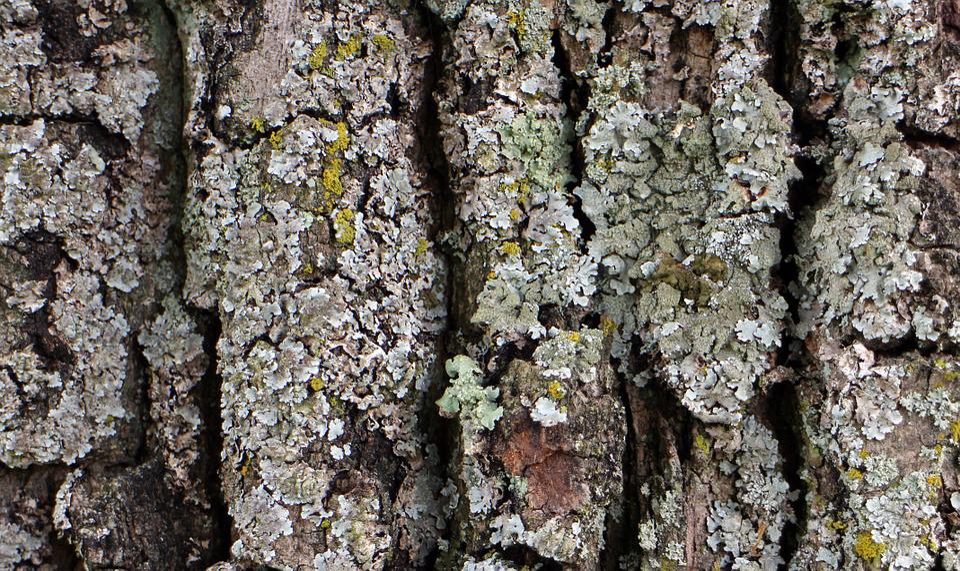 Bark, Wood, Tree, Log, Tree Bark, Structure, Background