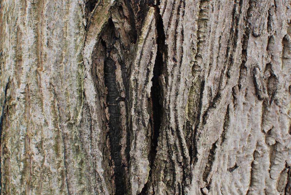 Bark, Wood, Tree