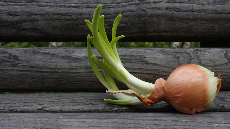 Onion, Yellow, Bench, Bloom, Wood, Green