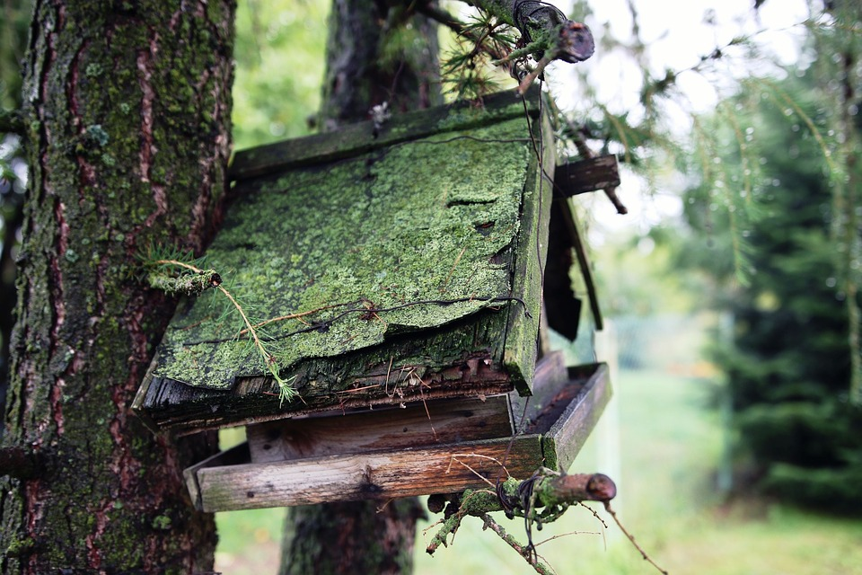 Booth For Birds, Wood, Moss, Old, Nature, Destroyed
