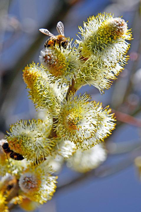 Spring, Barka, Bloom, Wood, Nature, Branch, Green